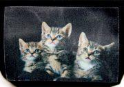 insulinpumpetaske til børn med kattekillinger fra pump wear
